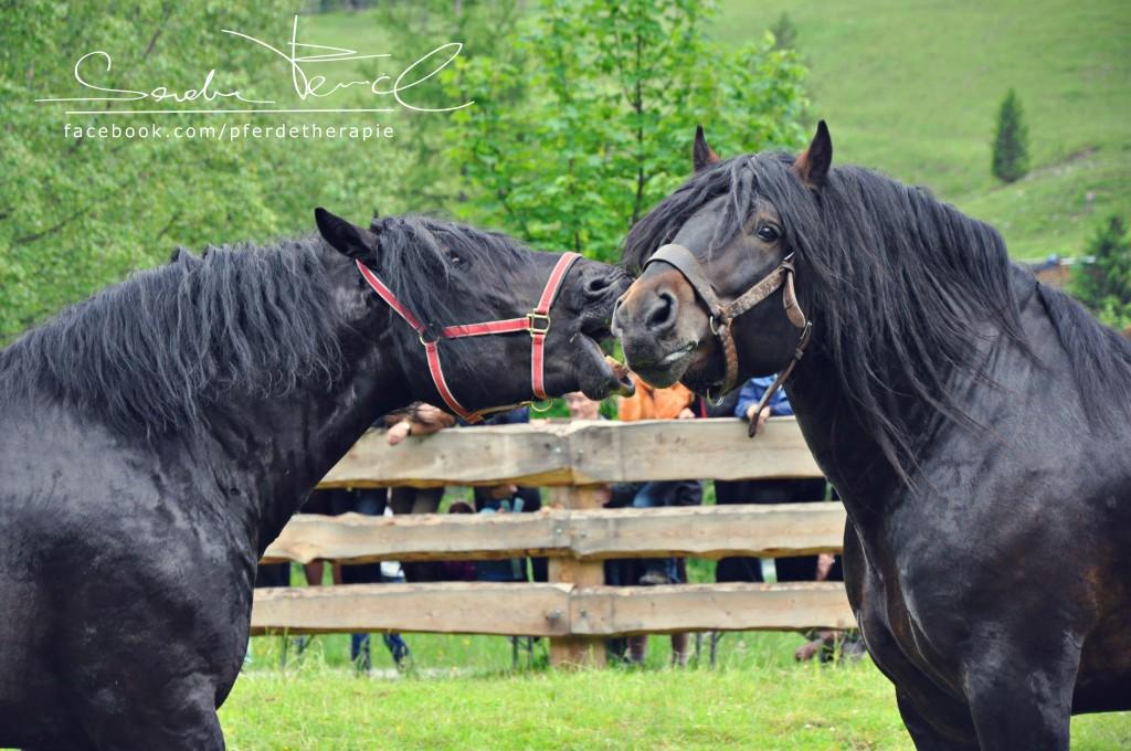 Fotos von Pferde Fencl