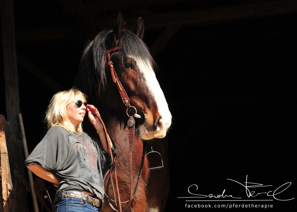 Pferdefotos kaufen