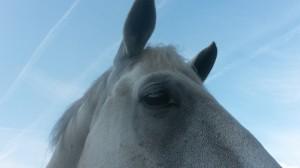 Ganzheitliche Pferdegesundheit Sandra Fencl