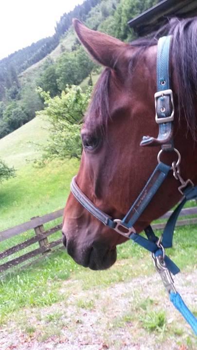 """Wenn Pferde merken, dass Menschen sie """"verstehen"""", beginnen sie oft deutlicher zu kommunizieren"""