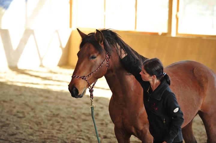 """Manchmal werden Pferde eng ausgebunden, manchmal wird auch ganz schön in den Zügel """"gerupft"""", was sicherlich NICHTS mit feinen Zügelhilfen zu tun hat..."""