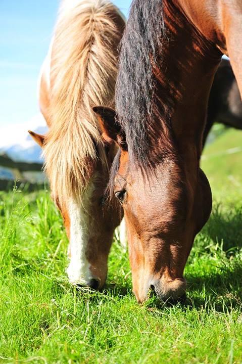 Mit Pferden spazieren zu gehen ist eine wunderbare Sache
