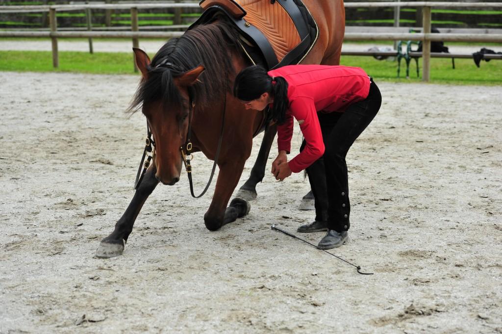 Zirzensik Pferd
