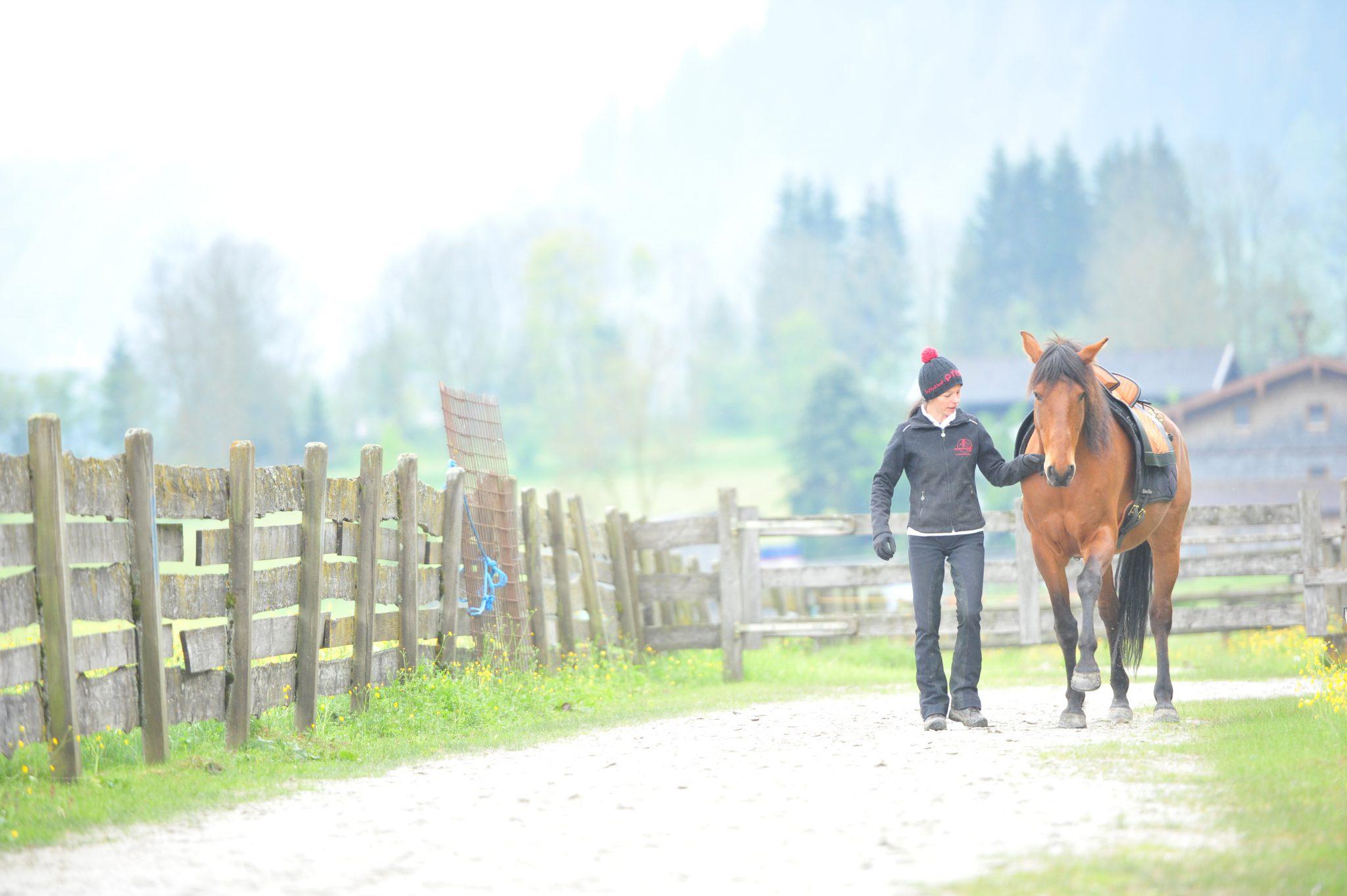 bodenbedingungen für pferde