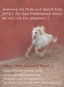 Pferde-Praktikum