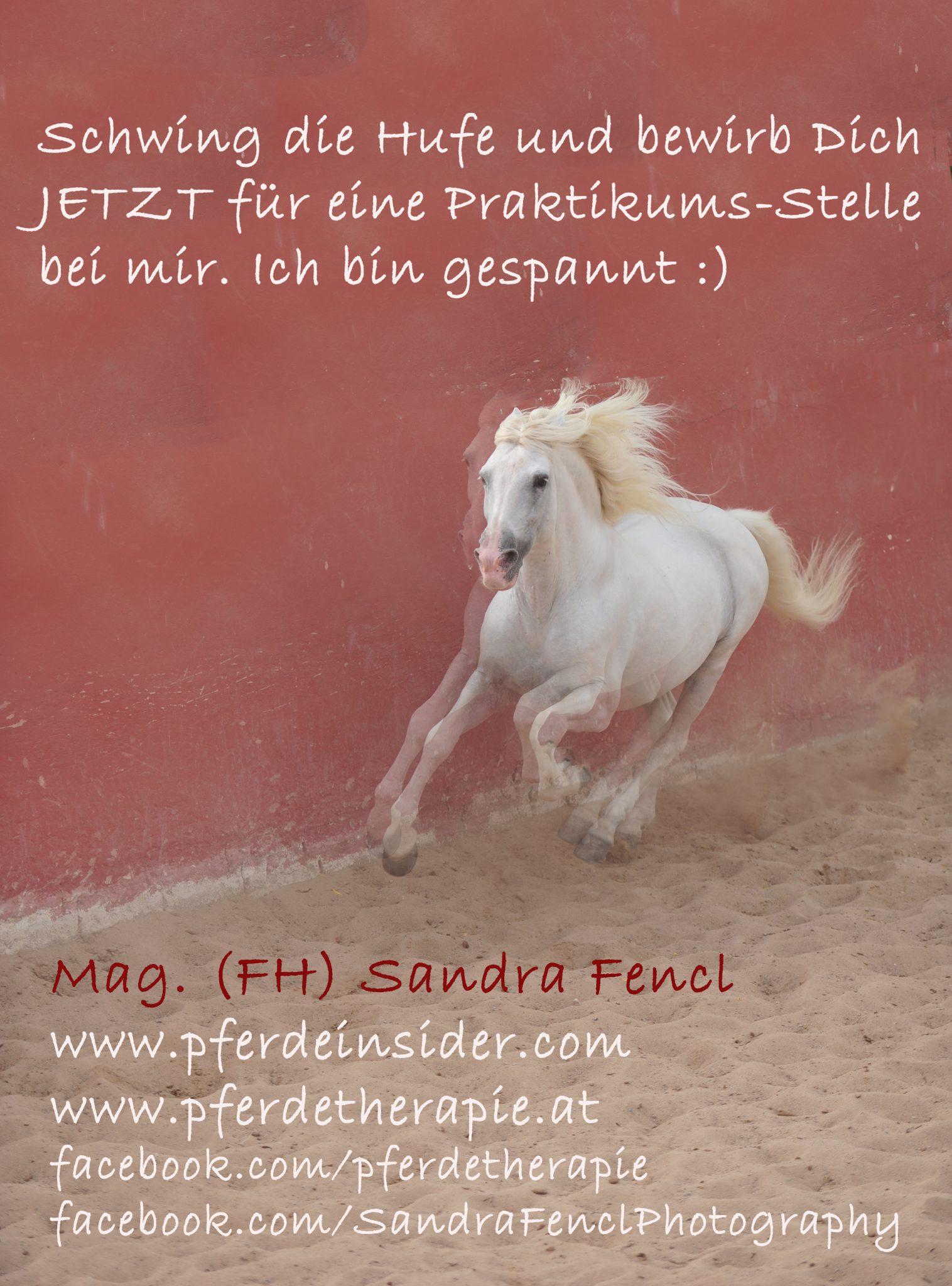 Jobs & Praktika | Sandra Fencl