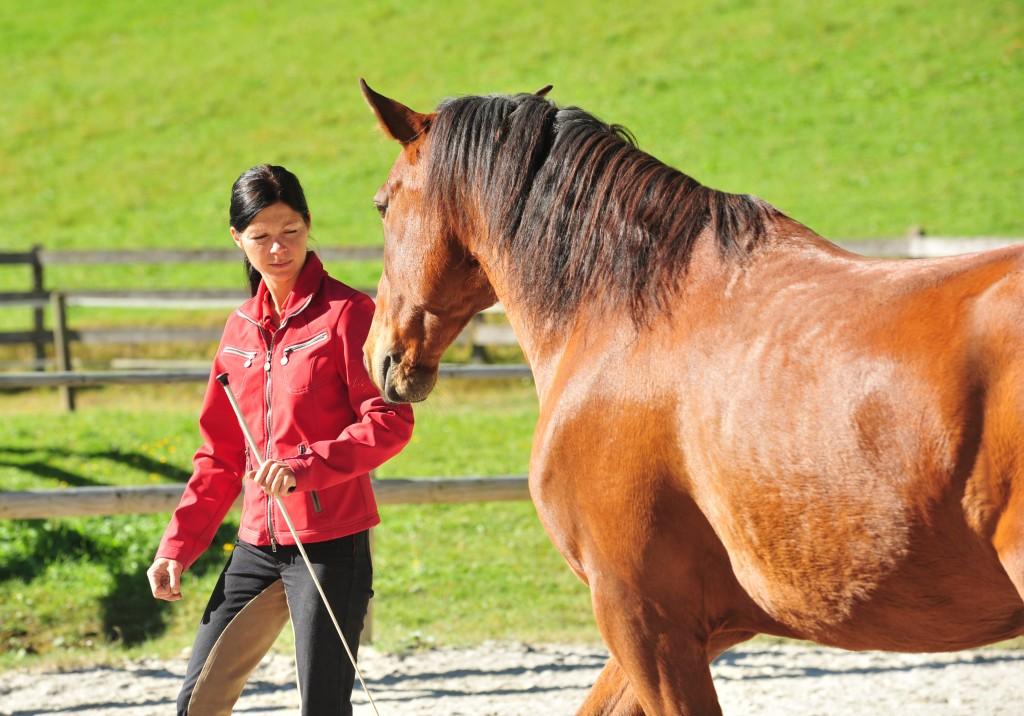Futterlob im Pferdetraining ist - meiner Meinung nach - nicht immer beziehungsförderlich.
