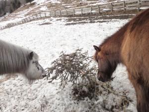 Christbaum Pferde fressen
