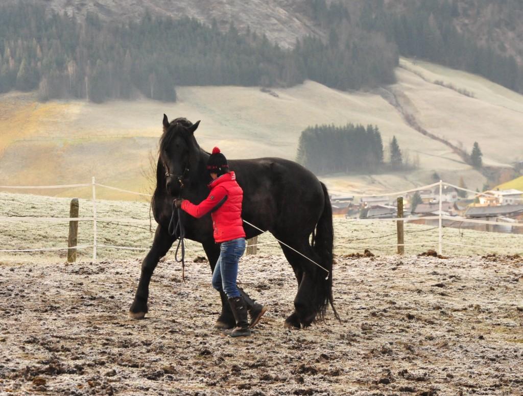 Je klarer das innere Bild im Pferdetraining, desto größer und schneller der Trainingsfortschritt...