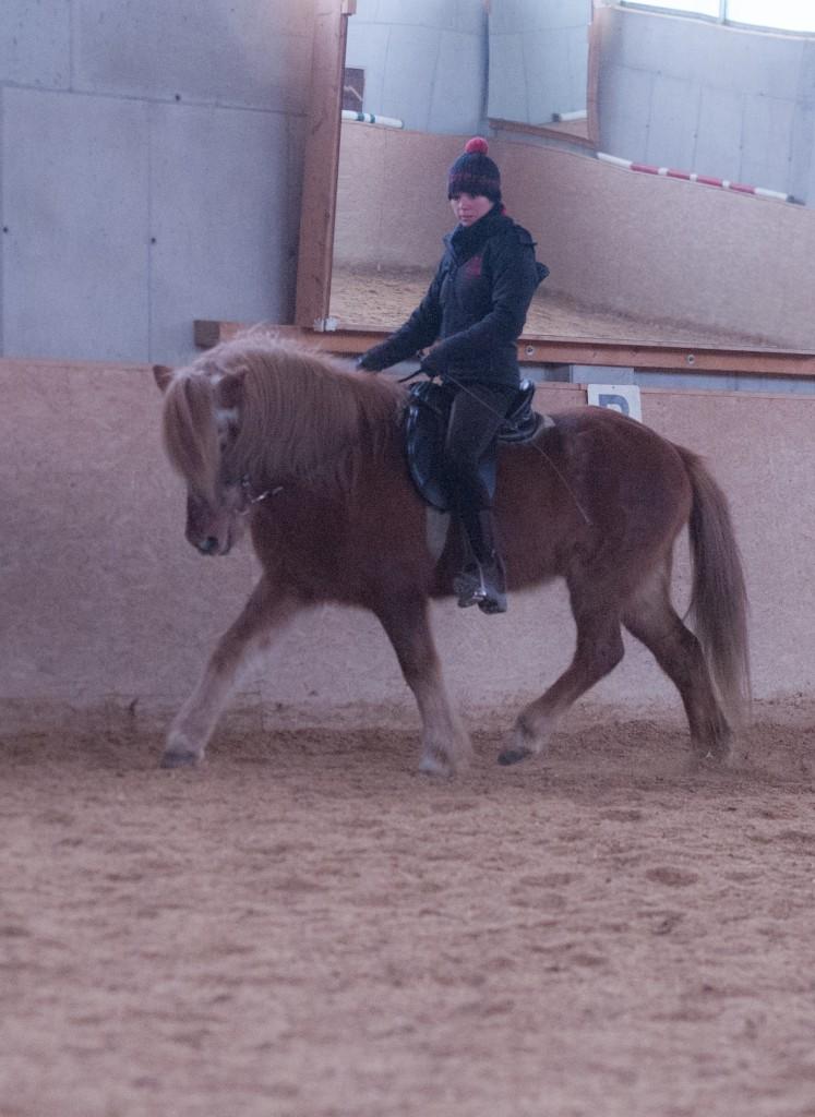 Pferdetraining Sandra Fencl