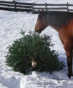 Sind Weihnachtsbäume zum Verfüttern geeignet?