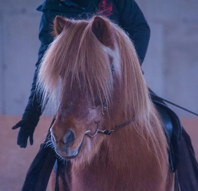 Können Pferde logisch denken?