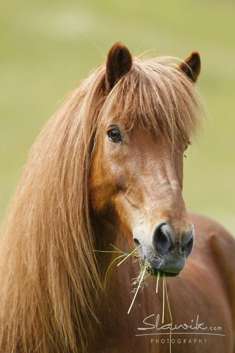 verlass pferde kaufen