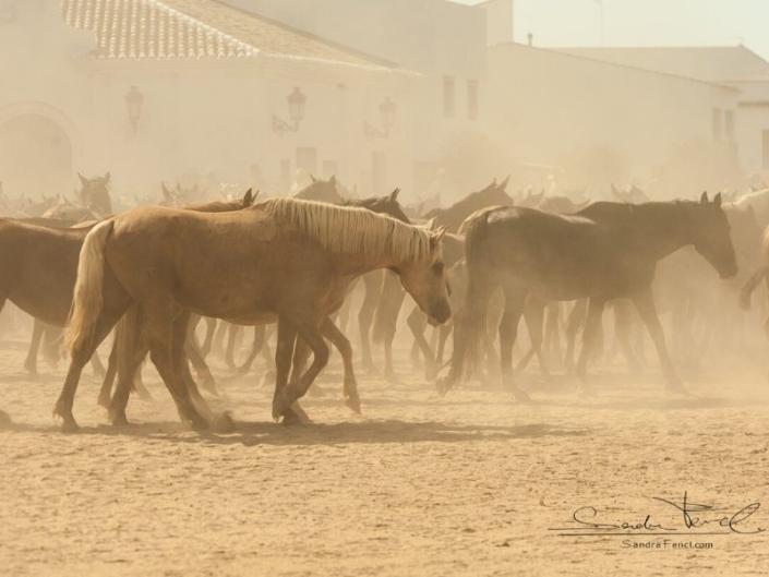 Heiße Temperaturen im Sommer machen vielen Pferden zu schaffen...