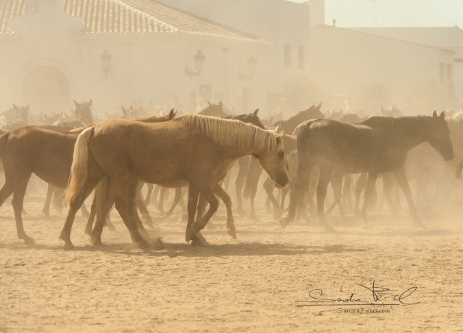 Hitze tut Pferde nicht gut.