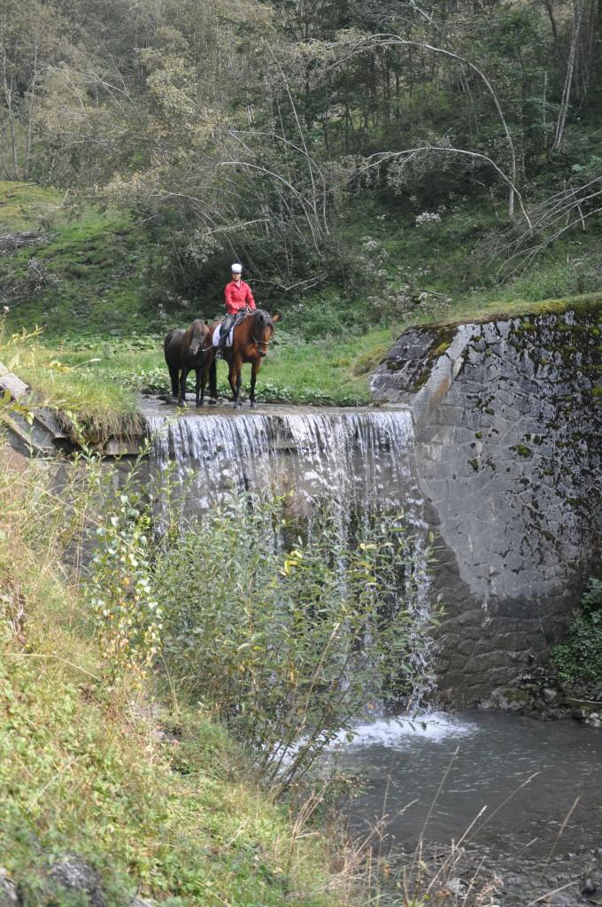 Handpferdereiten kann einem unerfahrenem Pferd zu mehr Sicherheit im Gelände verhelfen .12 (2)