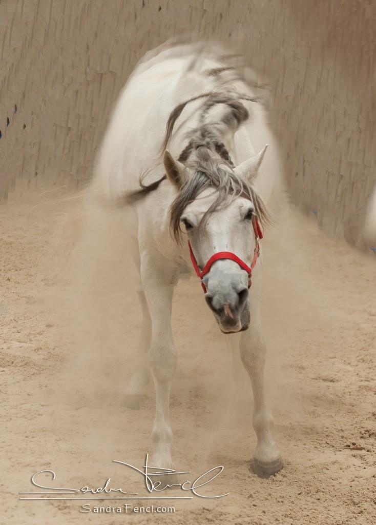 Auch das Schütteln lockert den Bewegungsappart des Pferdes.