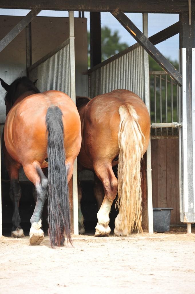 richtige Pferdehaltung