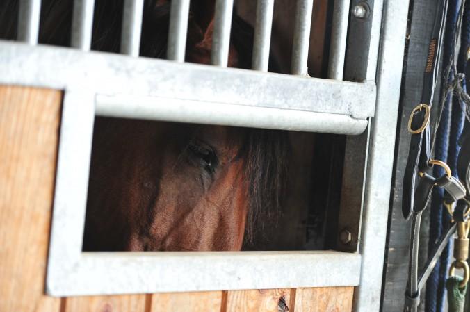Was wünschen sich Pferde von ihren Besitzern für 2016?