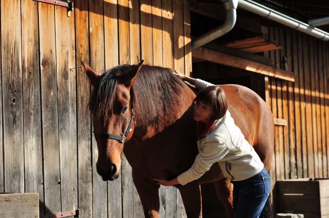 Jin Shin Jyutsu für Pferde München