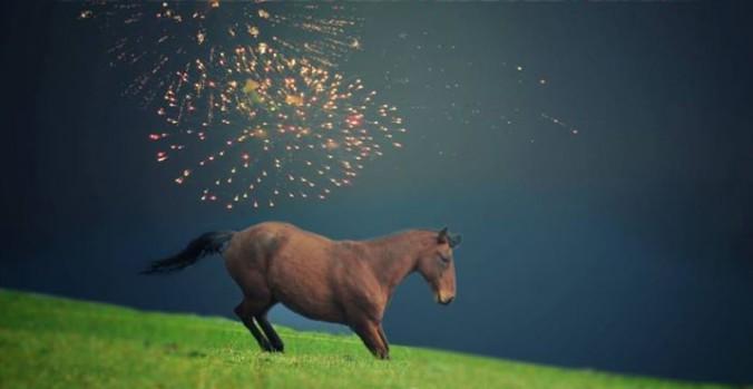 Silvesterfeuerwerk: So hilfst Du Deinem Pferd