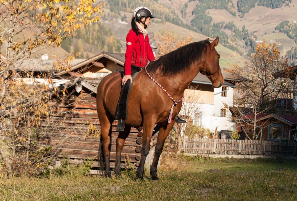 Konsequenz gibt Pferden Sicherheit