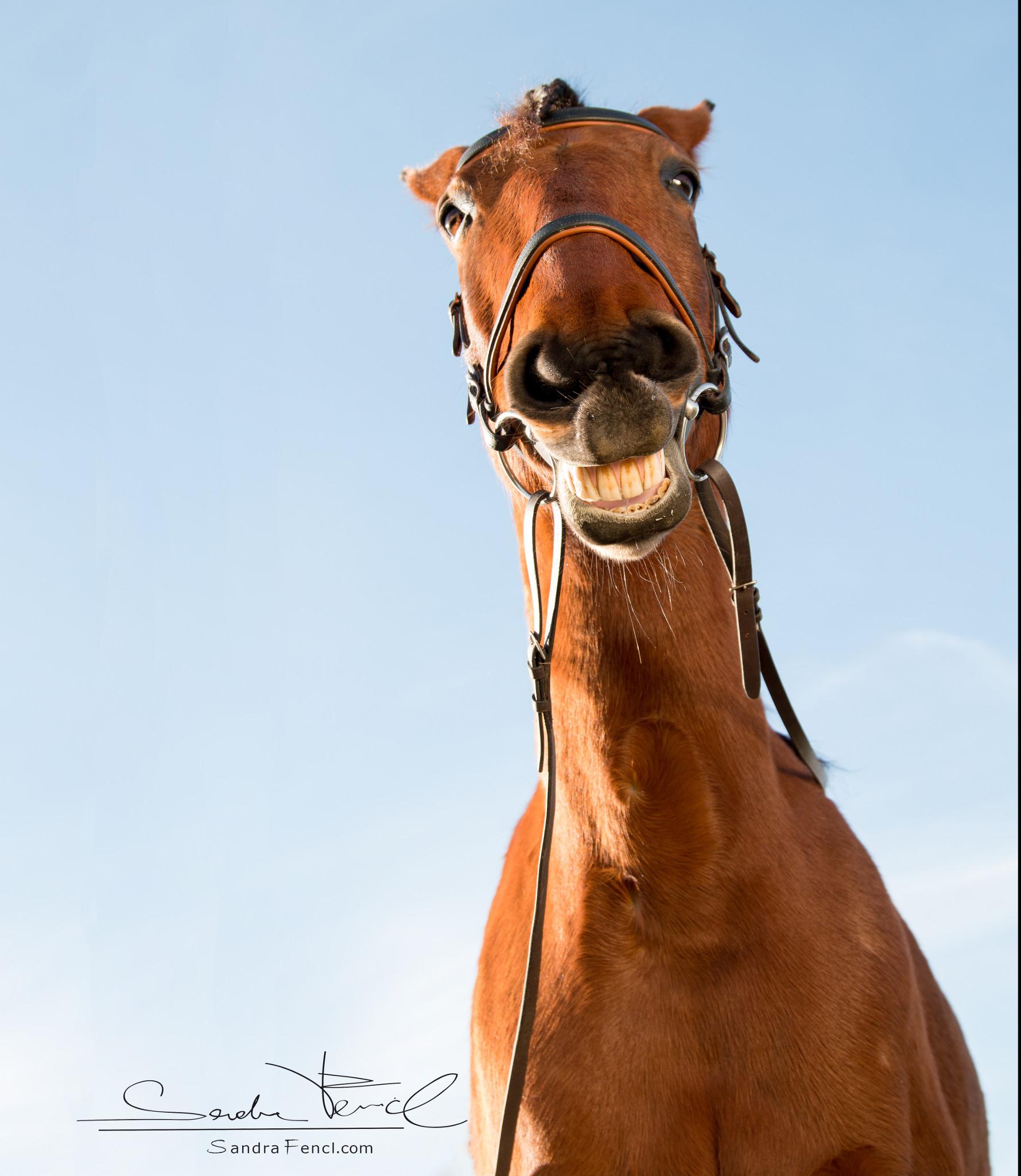 chusing pferd gymnstizieren