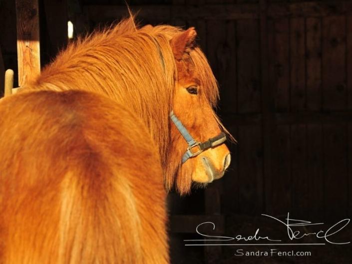 Fellwechsel Sandra Fencl Pferd