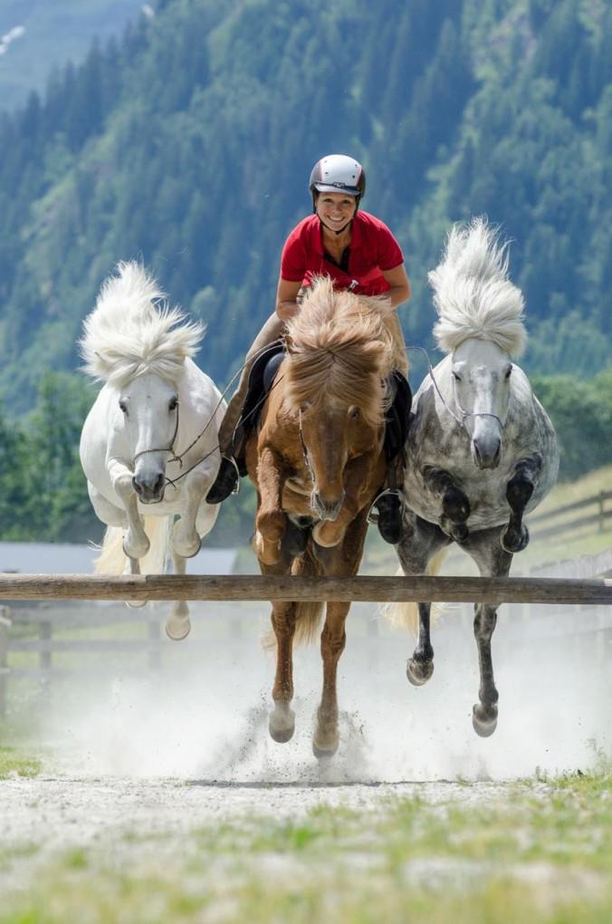 links hohles pferd