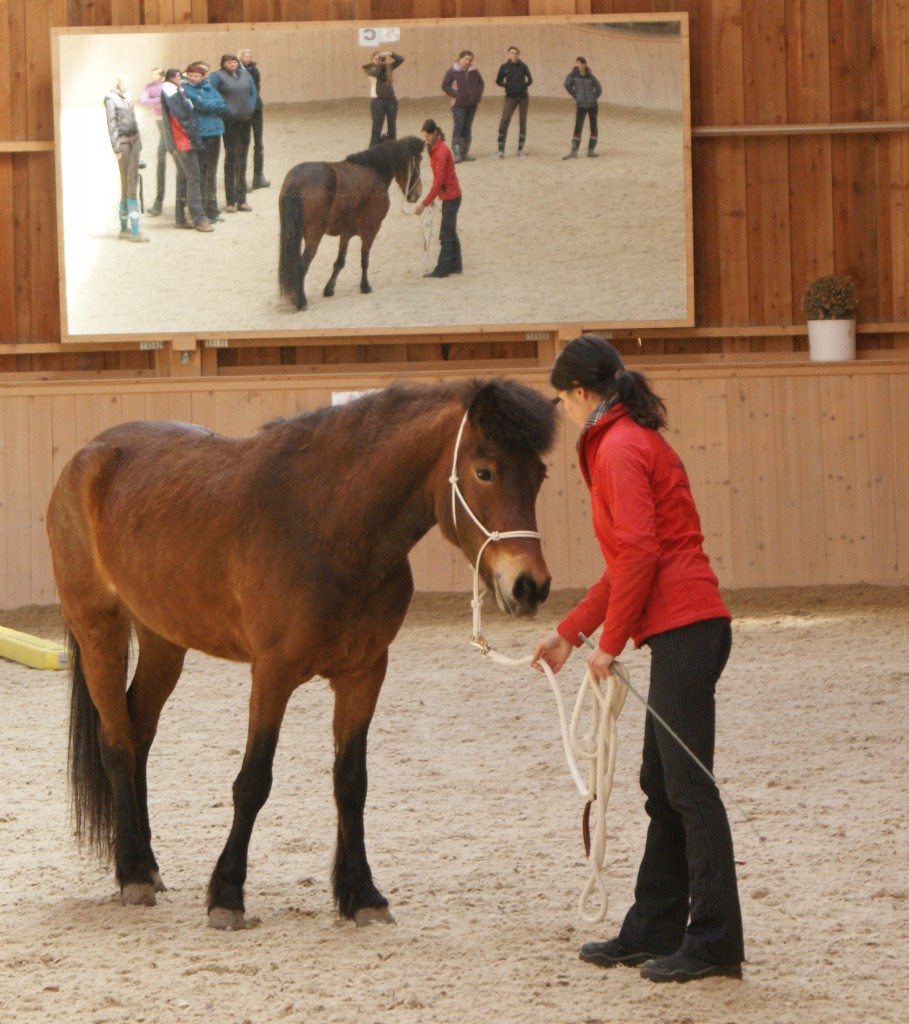 Motivation Pferd