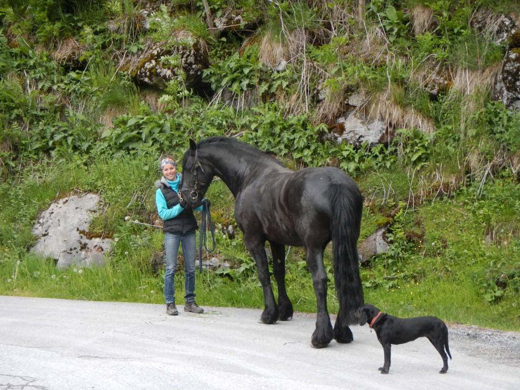 Pferdemotivation