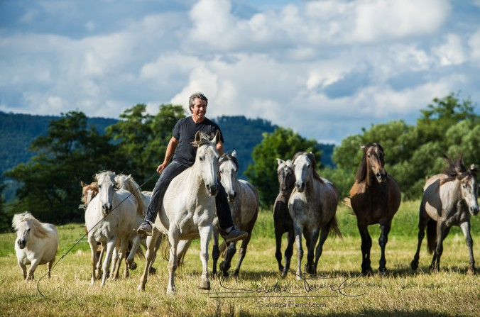 altes pferd nimmt immer mehr ab trotz heucobs