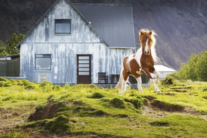 Iceland_Rookie-54