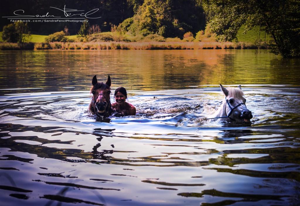 Wenn Pferde Angst vor Wasser haben