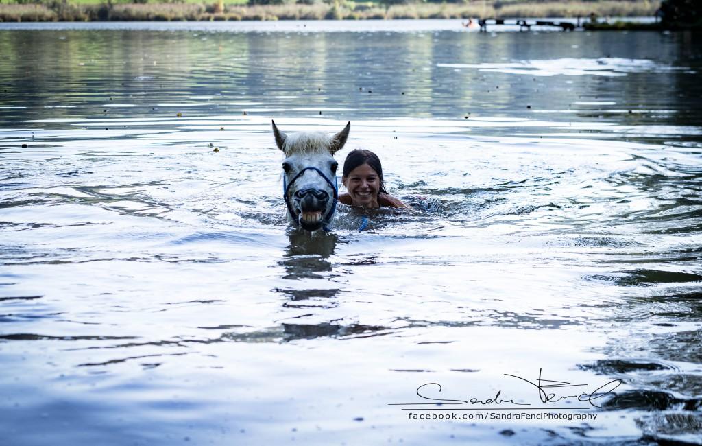 Pferde ans Wasser gewöhnen