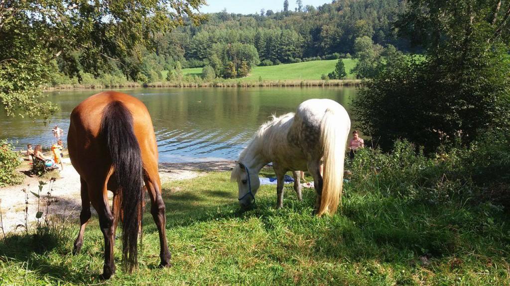 Pferde Wasser vertrauen