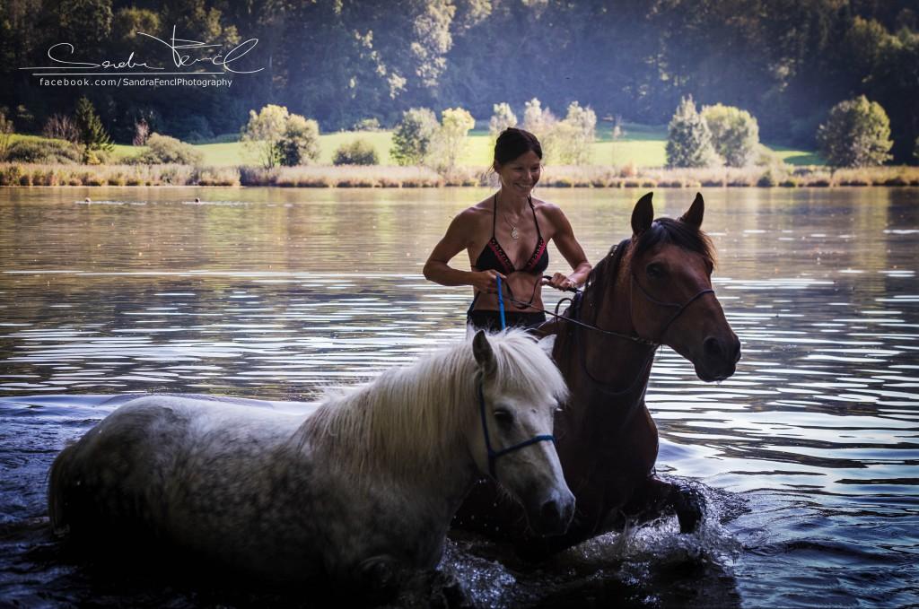 Pferde Wasser