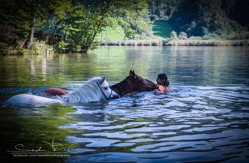 mit Pferden Schwimmen