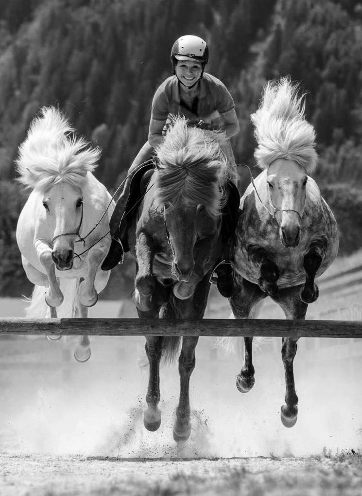 Pferdeausbildung Sandra Fencl