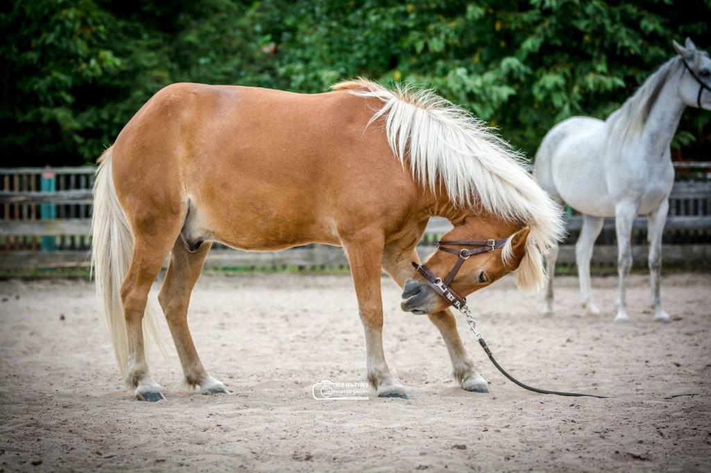Kompliment Pferd beibringen