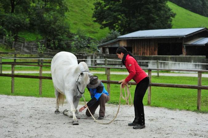 Kompliment Pferd lernen