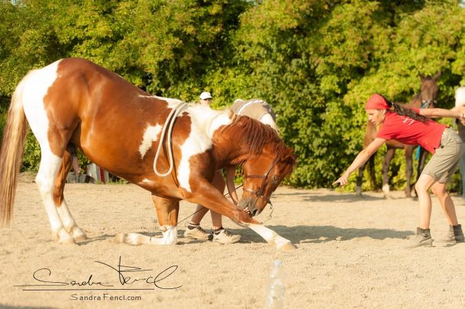 Kompliment dem Pferd beibringen