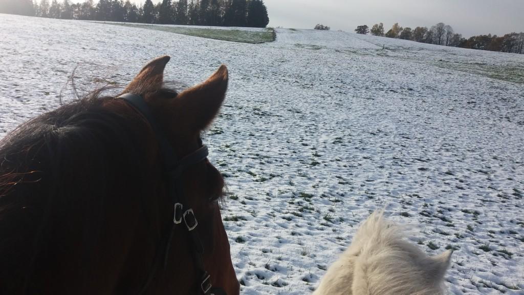 Zirkuslektionen dem Pferd beibringen