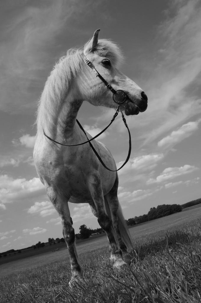 Pferdetraining Sandra Fenzl