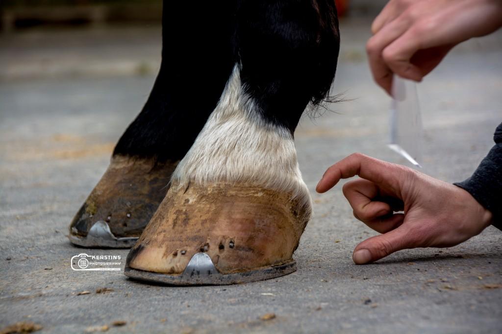 Bei vielen Pferden sind zu Hohe Trachten ein Problem.