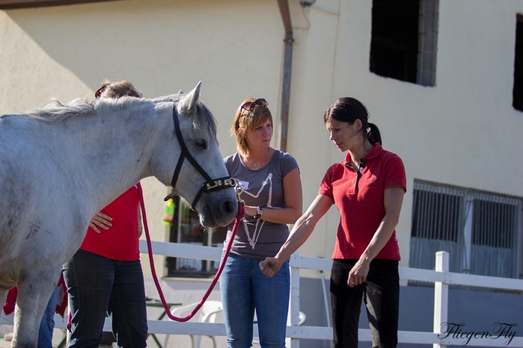 Die Teilnehmer lernen das Pferd ganzheitlich zu betrachten - von Kopf bis Huf!