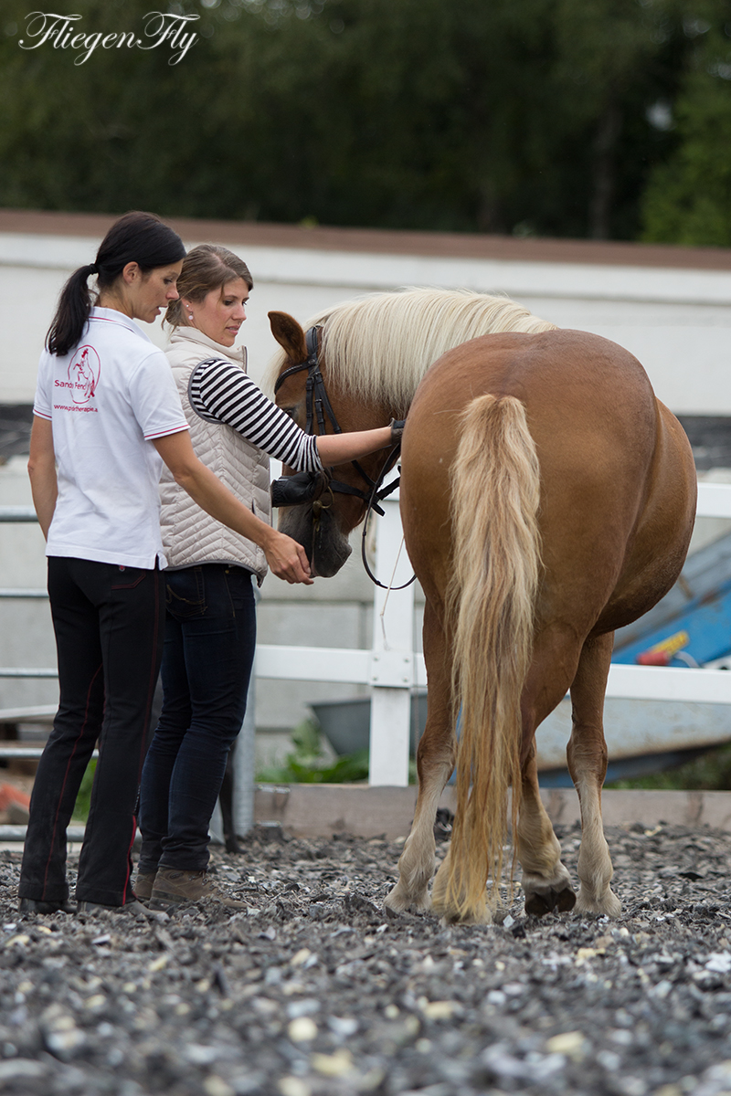 pferd fühlig ohne eisen