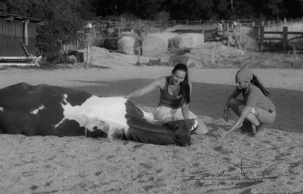 pferd-zirkuslektionen-sandra-fencl