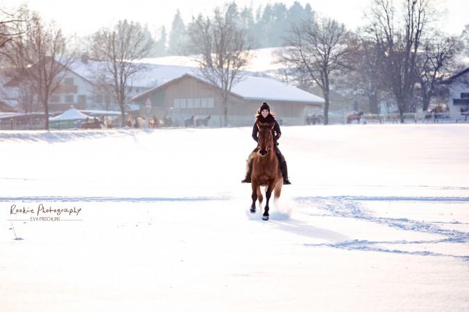 eigenes pferd checkliste