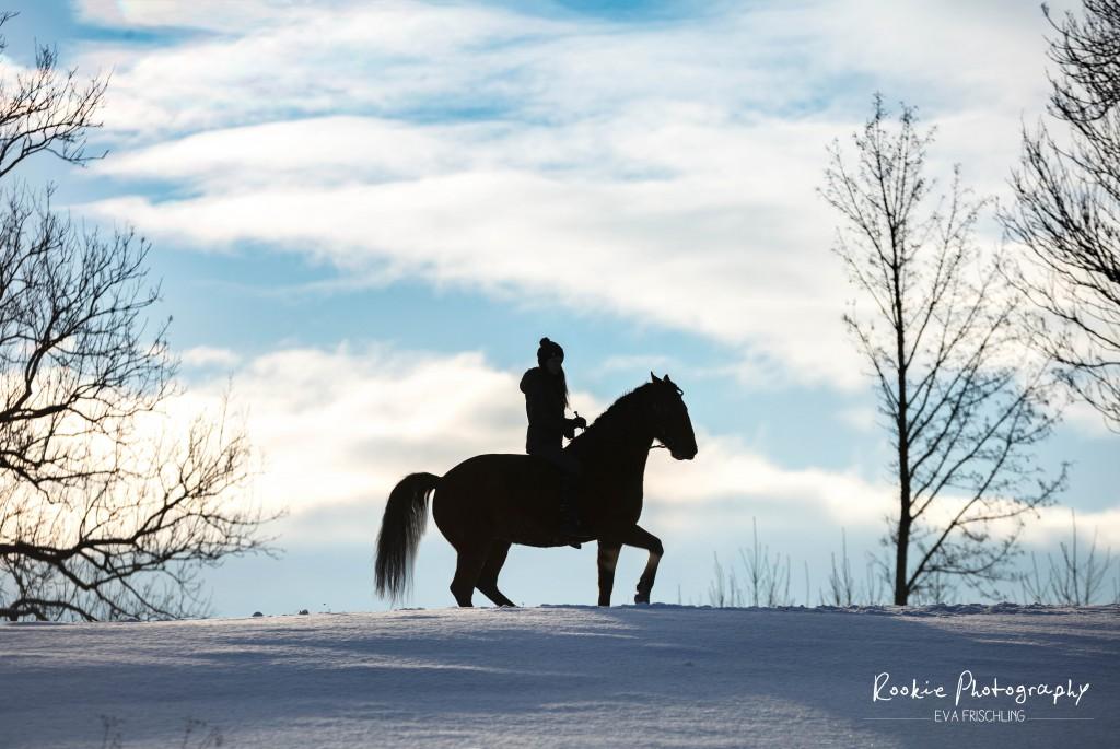 Mental starke Pferde haben immer mental starke Reiter - und das gibt Sicherheit!
